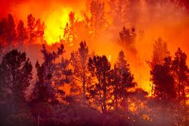 Coop's Vegetation Management at Issue in New Mexico Wildfirepage banner image